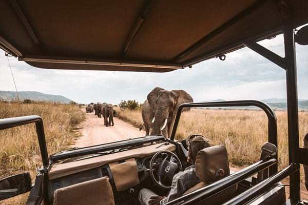 View of elephants from luxury safari vehicle